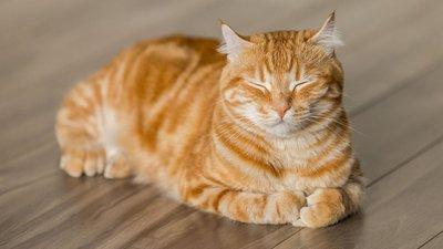 meow-parlour-v2.jpg